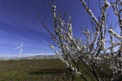 windmills Immagini Stock