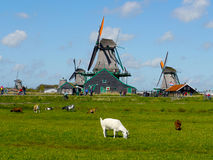 windmills image stock