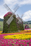 Windmills And Flowers Stock Photo