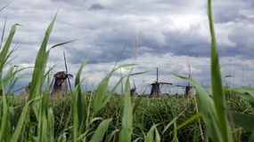 Windmills behind reed nder dutch sky at Kinderdijk Royalty Free Stock Image
