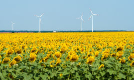 Windmills behind sunflower field Stock Photo
