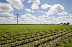 Windmills of Benton County, Indiana. In the summer Royalty Free Stock Image
