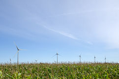 Windmills in a corn field Stock Image