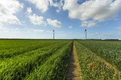 Windmills for electric power production in agricultural fields in Normandy, France. Renewable energy sources, industrial. Agriculture concept. Environmentally Stock Image