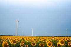 Windmills in the field with sunflower blossoms.  royalty free stock photo