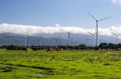 Windmills. In the fields of the Spanish province of Cadiz on a sunny day. You see some cows grazing Royalty Free Stock Images