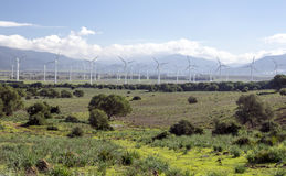 Windmills. In the fields of the Spanish province of Cadiz on a sunny day. You see some cows grazing Stock Photography