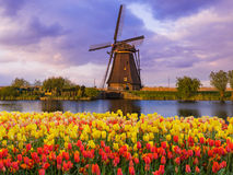 Windmills and flowers in Netherlands. Architecture background Royalty Free Stock Photos