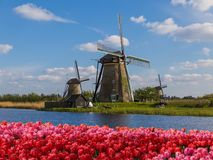 Windmills and flowers in Netherlands Stock Images