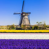 Windmills and flwers of Holland Stock Images