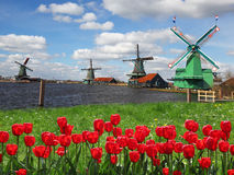 Windmills in Holland with canal. Traditional Dutch windmills with red tulips close the Amsterdam, Holland Royalty Free Stock Photos