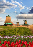 Windmills in Holland with tulips stock image