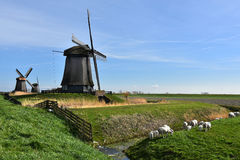 Windmills in Holland Royalty Free Stock Photography