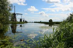 Windmills at Kinderdijk, the Netherlands. View of the windmills in kinderdijk the netherlands with in the foreground a duck in the water between the reeds stock photo