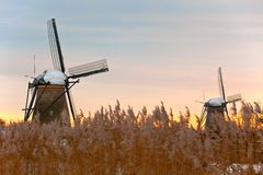 Windmills in Kinderdijk at winter sunset Stock Photos
