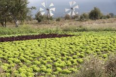 Windmills and salad crop being irrigated. Windmills on the Lasithi plateau Crete, Greece. October 2017. Windmills pump water to this Cretan fertile area Royalty Free Stock Photo