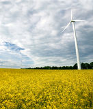 Windmills and a rape field Royalty Free Stock Photo