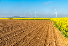 Windmills on the field Stock Images