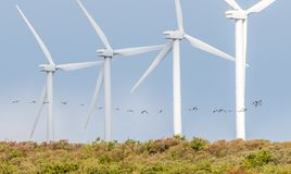 Windmills in a row with birds flying. Four windmills in a row with birds flying Stock Photography