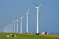 Windmills and sheep Royalty Free Stock Images