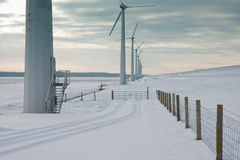 Windmills in the snow in Dutch wintertime Stock Image