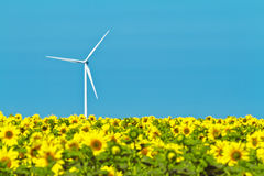 Windmills and sunflowers Stock Photography