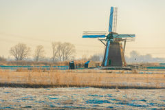 Windmills at Sunrise. The Windmills of the Munnikenpolder in Leiderdorp, the Netherlands awaken in the cold morning light Royalty Free Stock Image