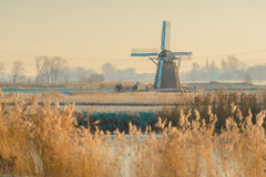 Windmills at Sunrise. The Windmills of the Munnikenpolder in Leiderdorp, the Netherlands awaken in the cold morning light Royalty Free Stock Photography