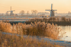 Windmills at Sunrise. The Windmills of the Munnikenpolder in Leiderdorp, the Netherlands awaken in the cold morning light Royalty Free Stock Photo