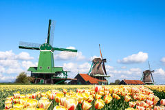 Windmills tulips stock images
