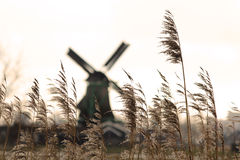 Windmills and wheat. Wheat fields with windmill in the background. Typical Netherlander atmosphere and scenery Stock Photos