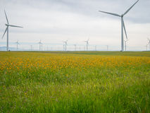Windmills and Wildflowers Royalty Free Stock Images