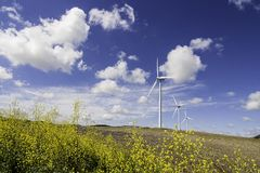 Windmills with yellow flowers royalty free stock photo