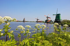 Windmills at Zaanse Schans Stock Image
