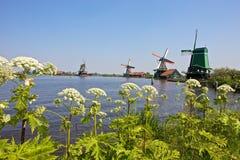 Windmills at Zaanse Schans. Historical windmills at famou Zaanse Schans near Amsterdam, Netherlands Stock Image