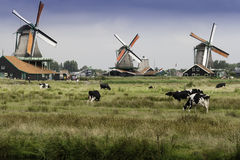 Windmills at Zaanse Schans in Holland Stock Image