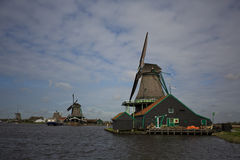 Windmills in Zaanse Schans, Netherlands. Windmills and tulips on a sunny day in spring Royalty Free Stock Photo