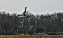Windmolen in de lente in Nederland dichtbij Keukenhof stock afbeelding