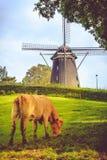 Windmolen en koe in de weide van Holland Stock Fotografie