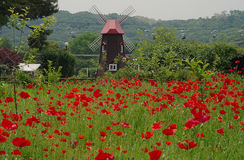 Windmolen en rood papavergebied, Zuid-Korea Royalty-vrije Stock Foto