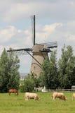 Windmolen in Kinderdijk stock foto