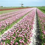 Windmolen met tulpengebied Stock Foto's