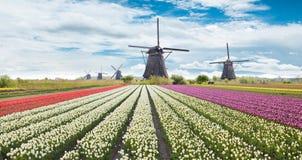 Windmolen met tulpengebied in Holland stock foto