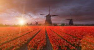 Windmolen met tulpengebied in Holland royalty-vrije stock afbeeldingen