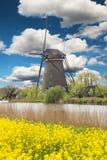 Windmolen met tulpengebied in Holland royalty-vrije stock foto