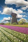 Windmolen met tulpengebied in Holland stock afbeelding