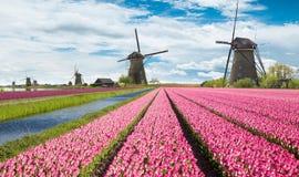 Windmolen met tulpengebied in Holland royalty-vrije stock foto's