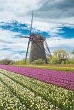 Windmolen met tulpengebied in Holland stock afbeeldingen