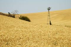 Windmolen op een tarwegebied Royalty-vrije Stock Fotografie