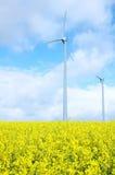 Windmolen op Gebied van Goud Stock Afbeeldingen